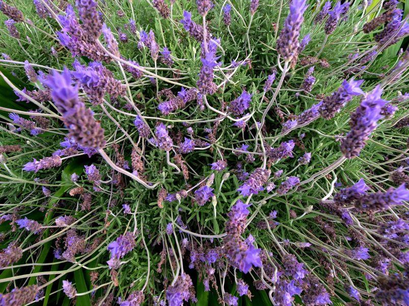 Fleurs macro et pas. PA215160