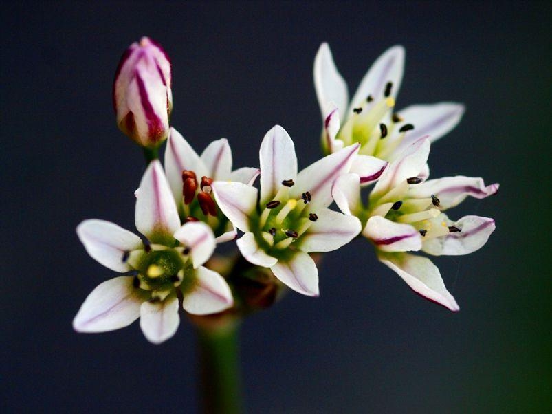 Fleurs macro et pas. PA215169