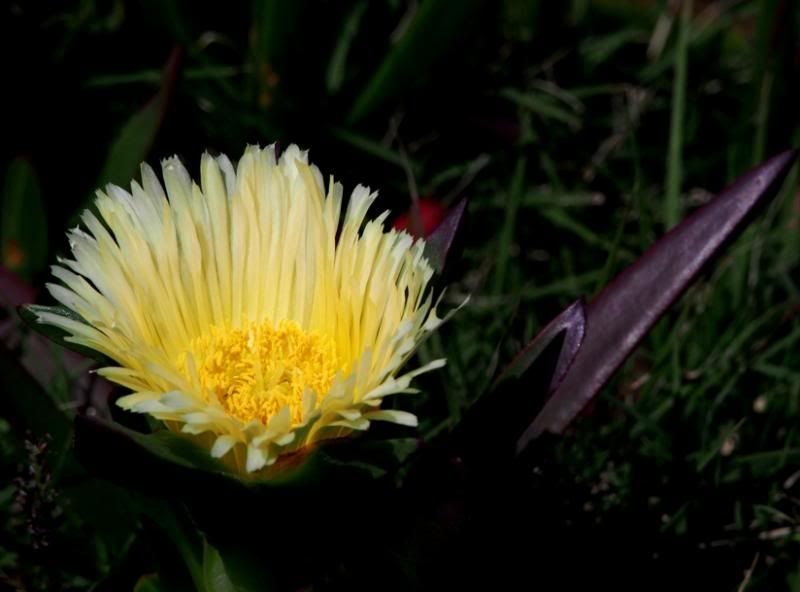 Fleurs pres de l'eau.... PB040008_zps1ee540a3