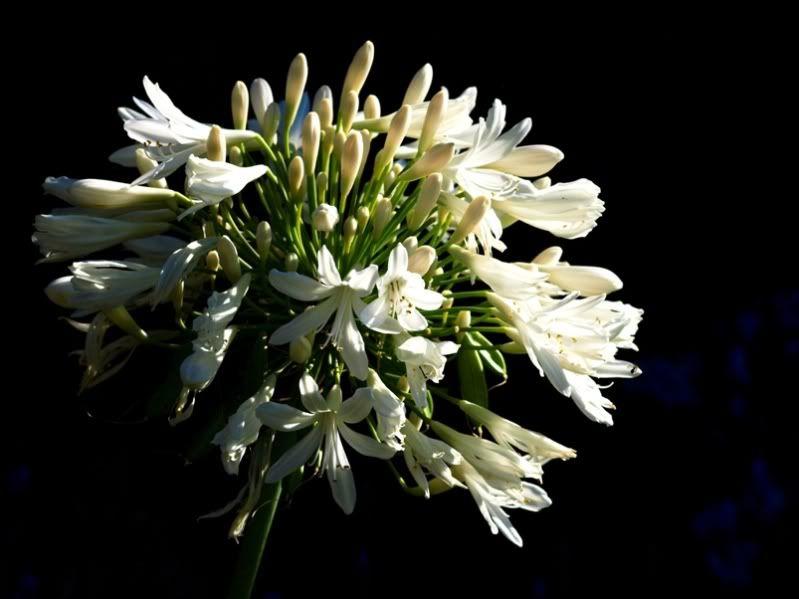 Encore des fleurs du jardin PC115183