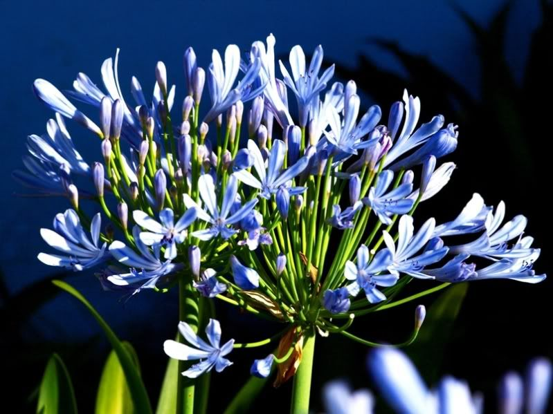 Encore des fleurs du jardin PC115186