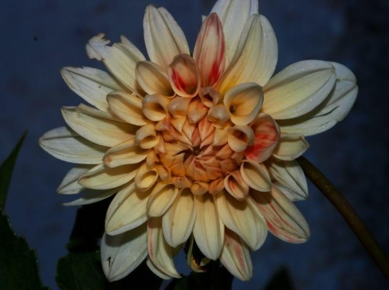 Et...des fleurs!!Biensur!!! PC115198