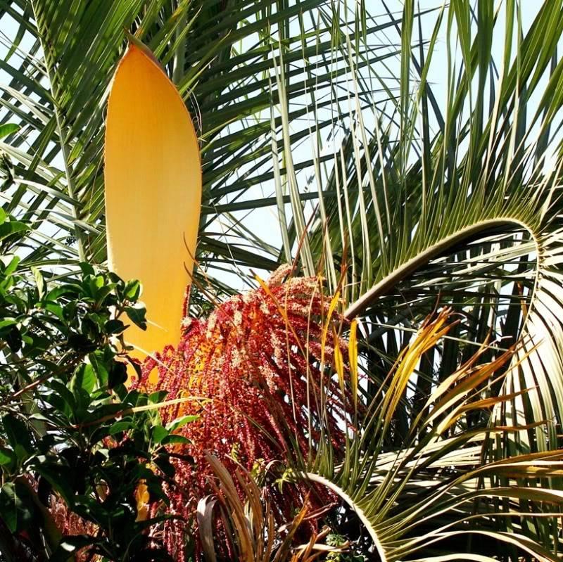 """Fleur de palmier""""butia"""" PC142088"""