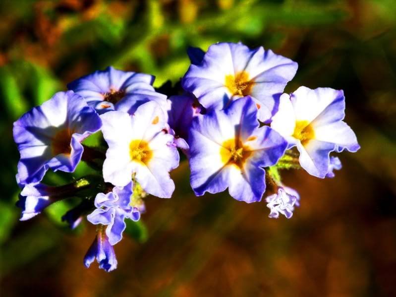 Fleurs sauvages et pas!! PC155262