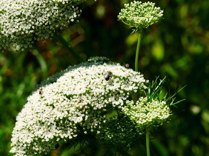 Fleurs sauvages et pas!! PC155278