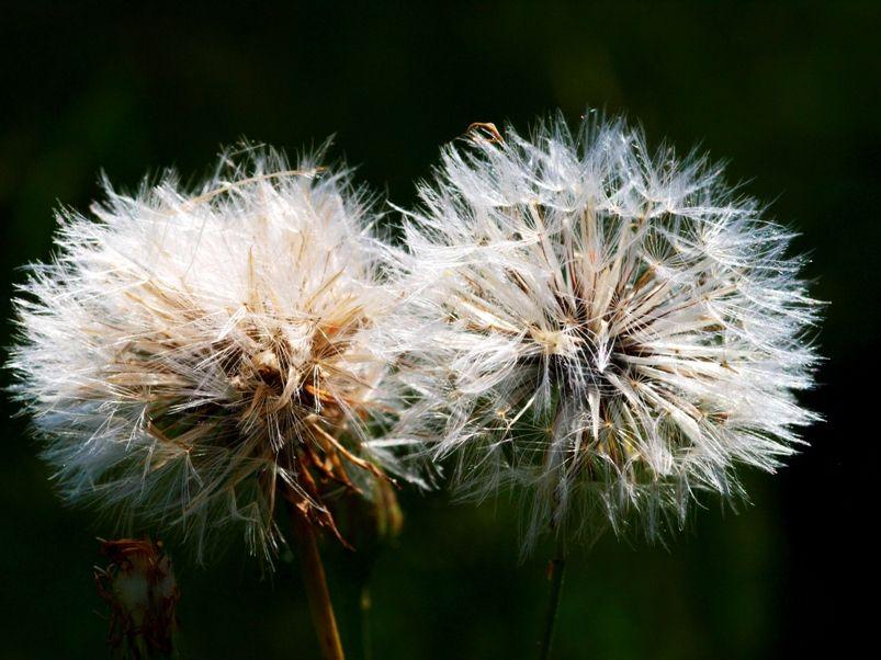 Fleurs sauvages et pas!! PC155279