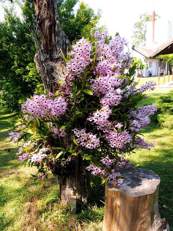 Orchidées a la ferme 2fe76472-93fd-4a11-a5c7-37a677a7e031_zpsipv7pgqh