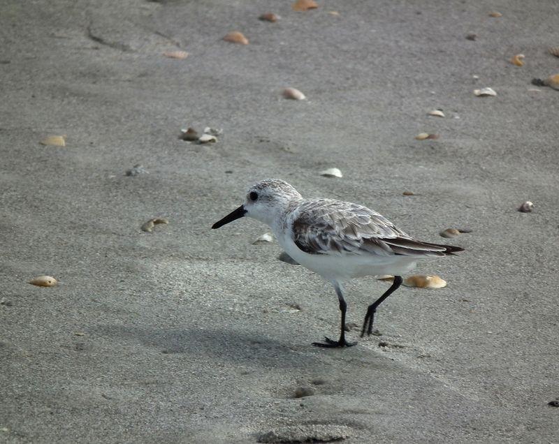 A la plage de Cocoa Beach 2 DSCF2531_zpstjlom5gz