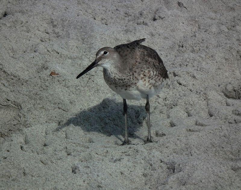 A la plage de Cocoa Beach 2 DSCF2538_zpslqdvxiud