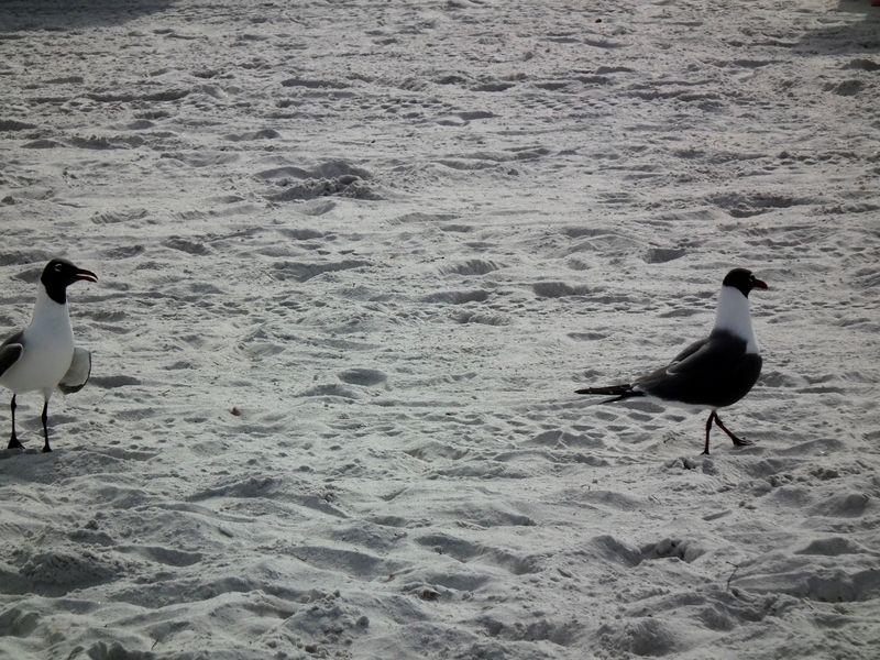 A la plage de Cocoa Beach 2 DSCF2608_zps09tsnl6e