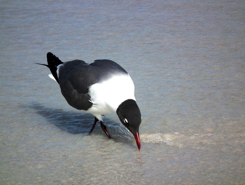 A la plage de Cocoa Beach 2 DSCF2610_zpsyr66jwdx