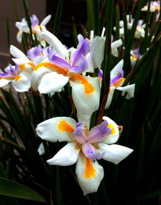 Fleurs que je ne connais pas(Ajoute) IMG_3954_zpsu8sgnl6q