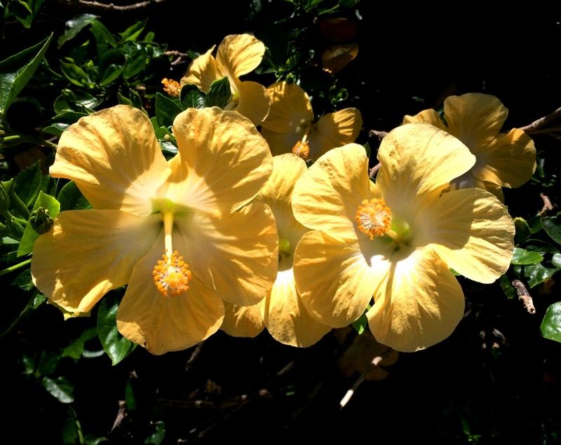 Belles fleurs IMG_4136_zpspehpoqci