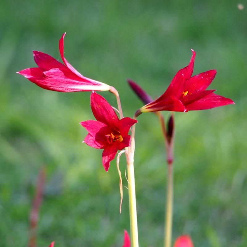 Fleur sauvage P2070021_zpsf3ebc3c5