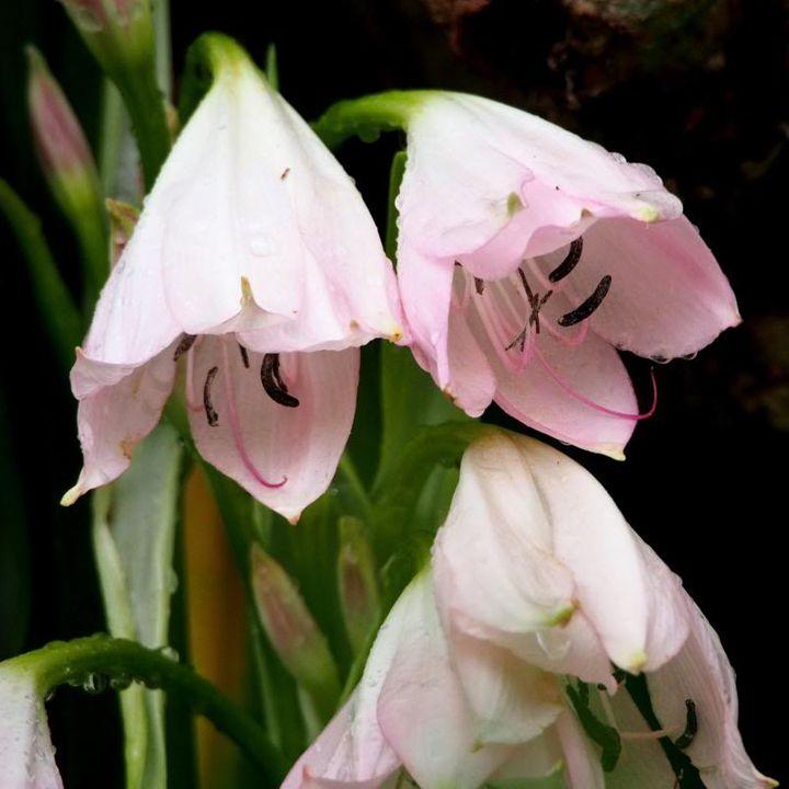 Fleurs sous la pluie P2090006_zps5f3b2db8