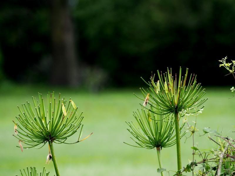 Fleurs sous la pluie P2100022_zps9b8cb373