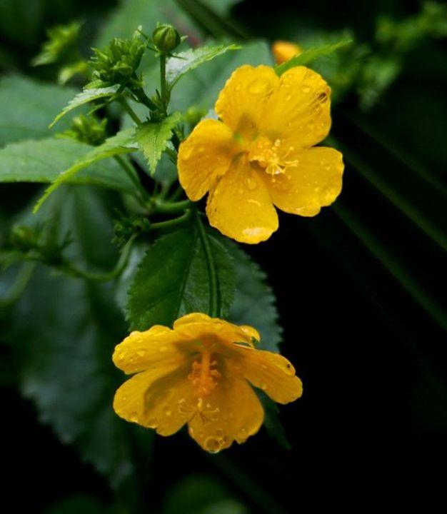 Fleurs sous la pluie P2100028_zps1b082590