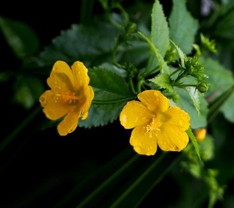 Fleurs sous la pluie P2100029_zps6c552c85