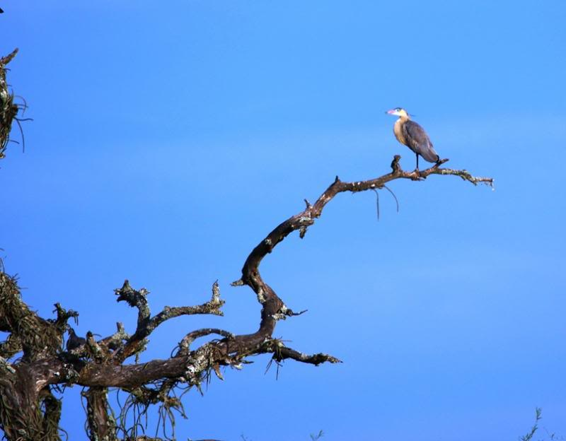 Heron flute du soleil P2170065_zpsacdbc30e