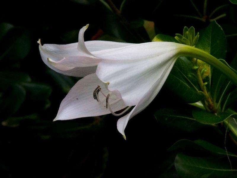 Encore des fleurs P2210006_zpsh4gvrtzr