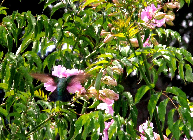 Encore des fleurs P2210014_zpsljyp7gy9