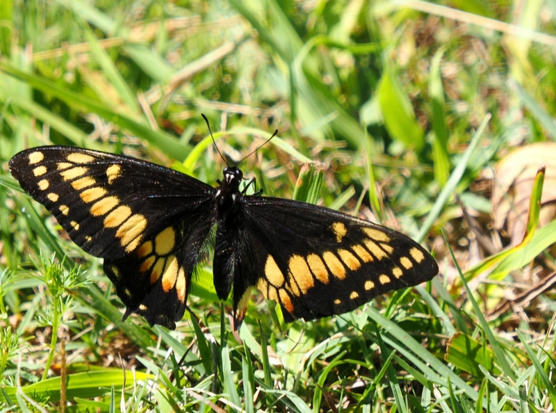 Un papillon!! P2270012%202_zpss1ilmqiz