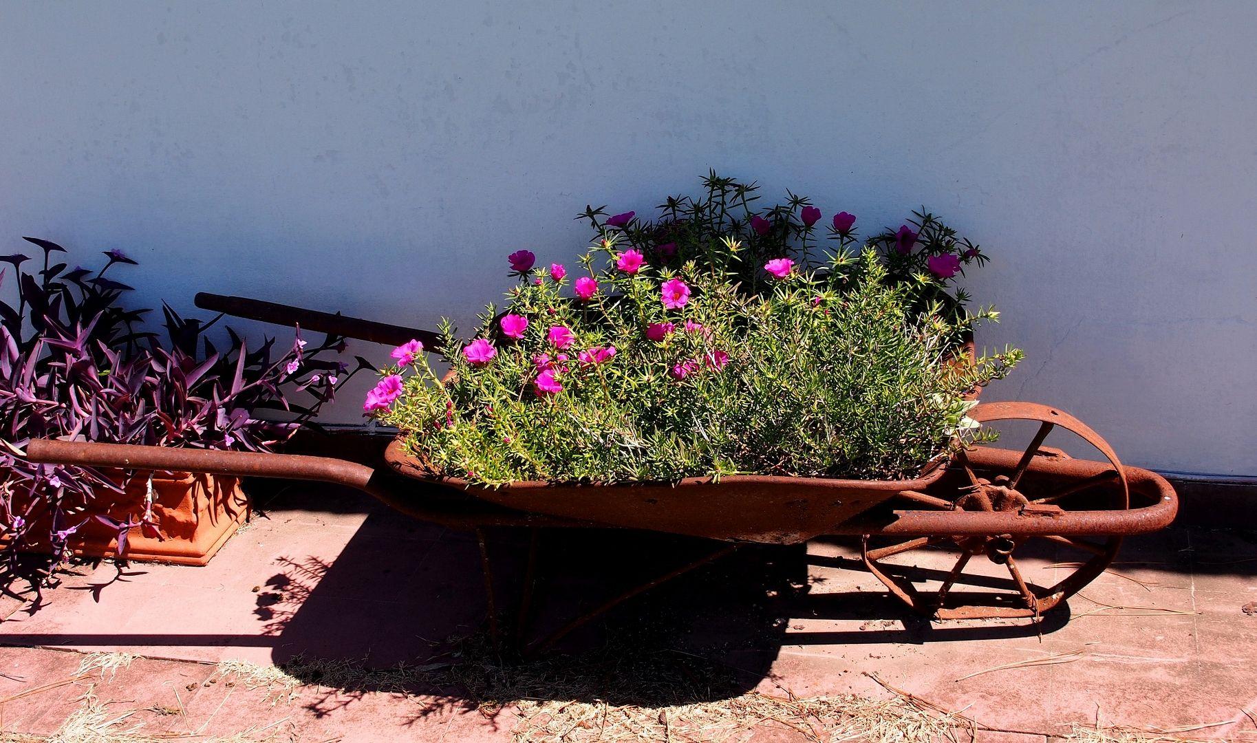 Fleurs hier!! P2280008_zpszpeqsve7