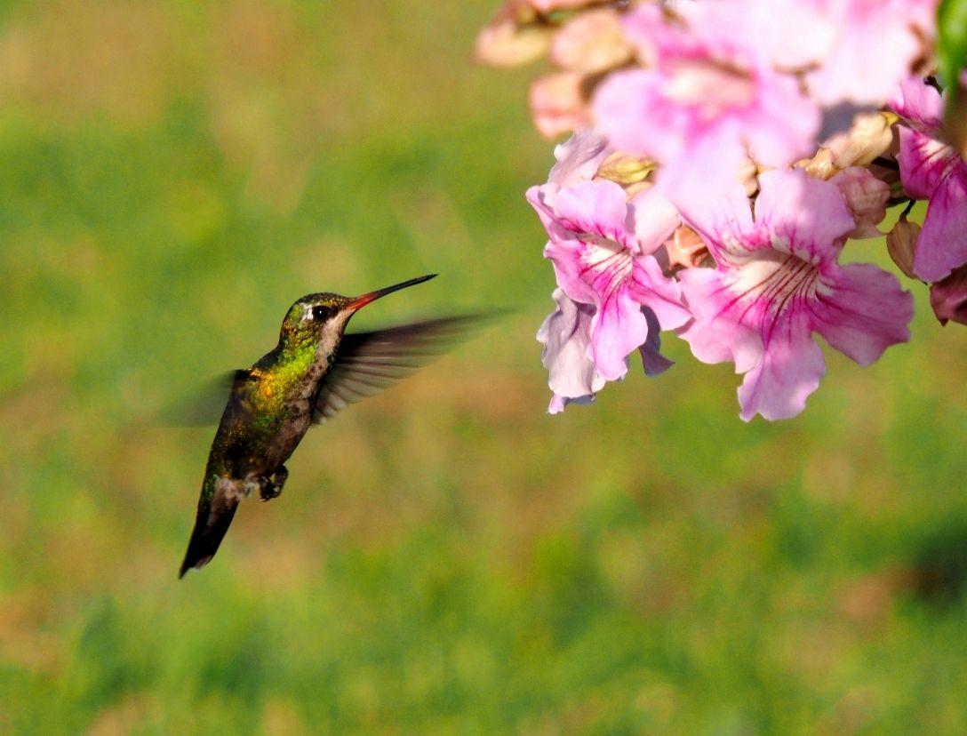 Oiseux mouche au soleil  P3140001_zpskiwd9v52