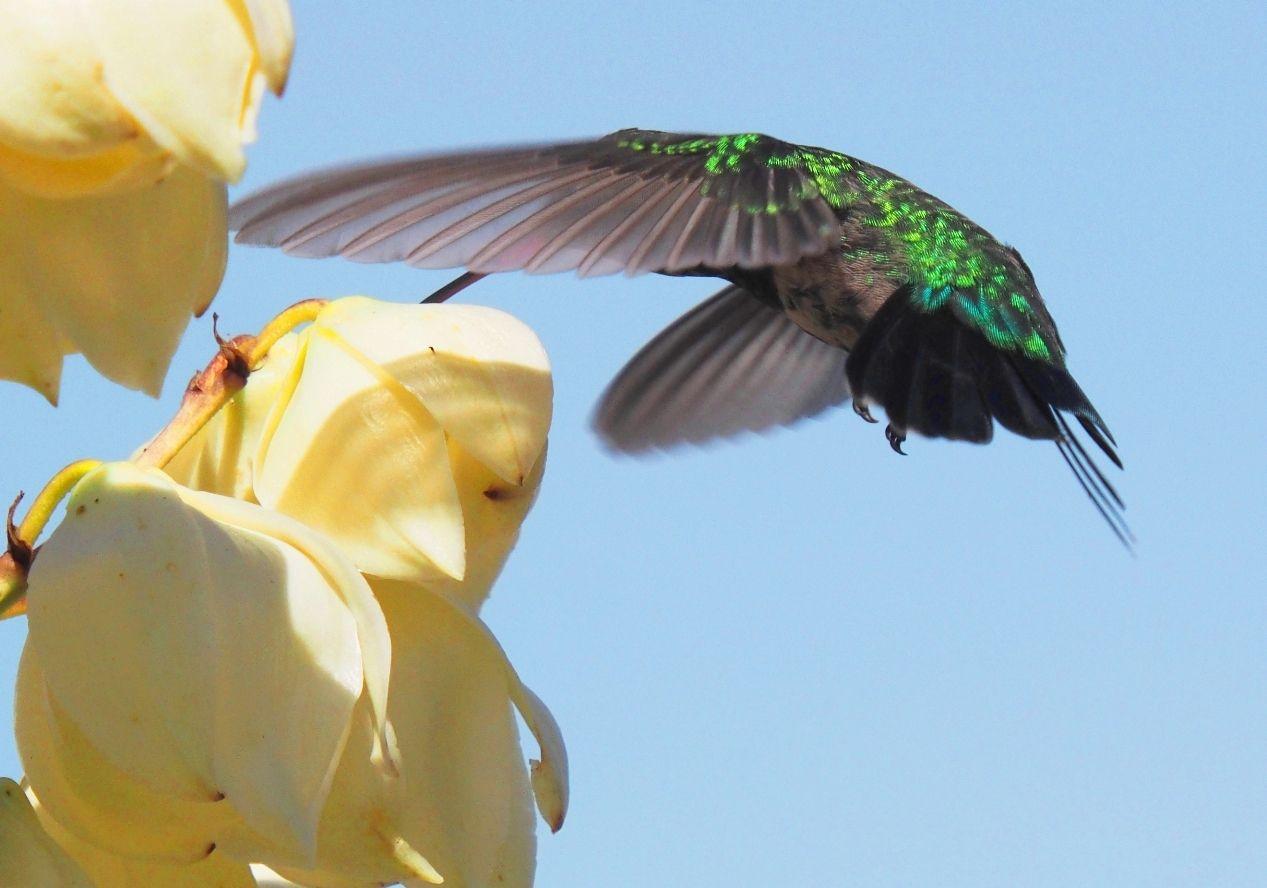 Oiseux mouche au soleil  P3140016_zpszsu9acuy