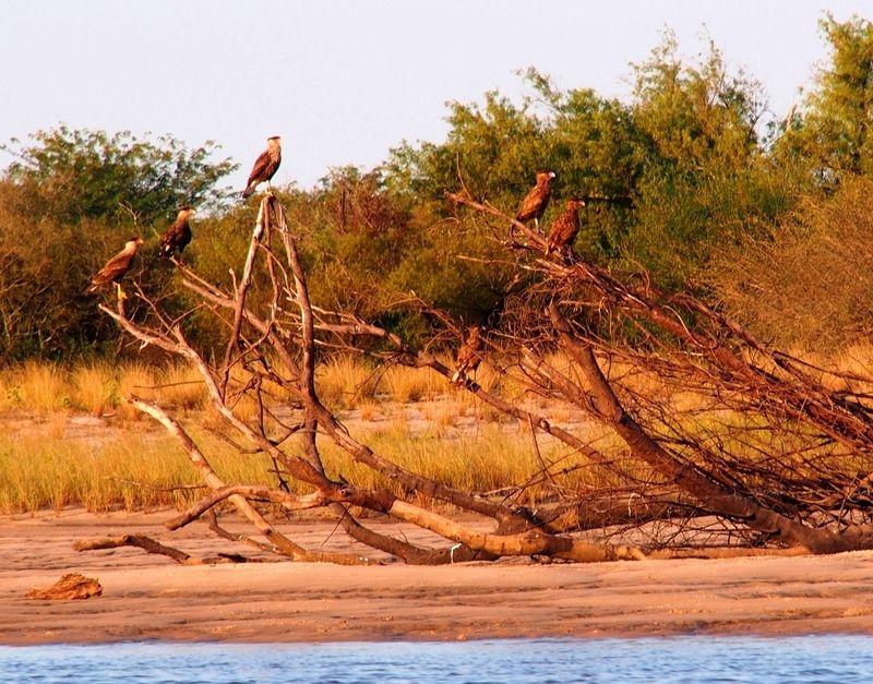 Vus aux plages du fleuve!! P3230075_zpsf6ktrobq