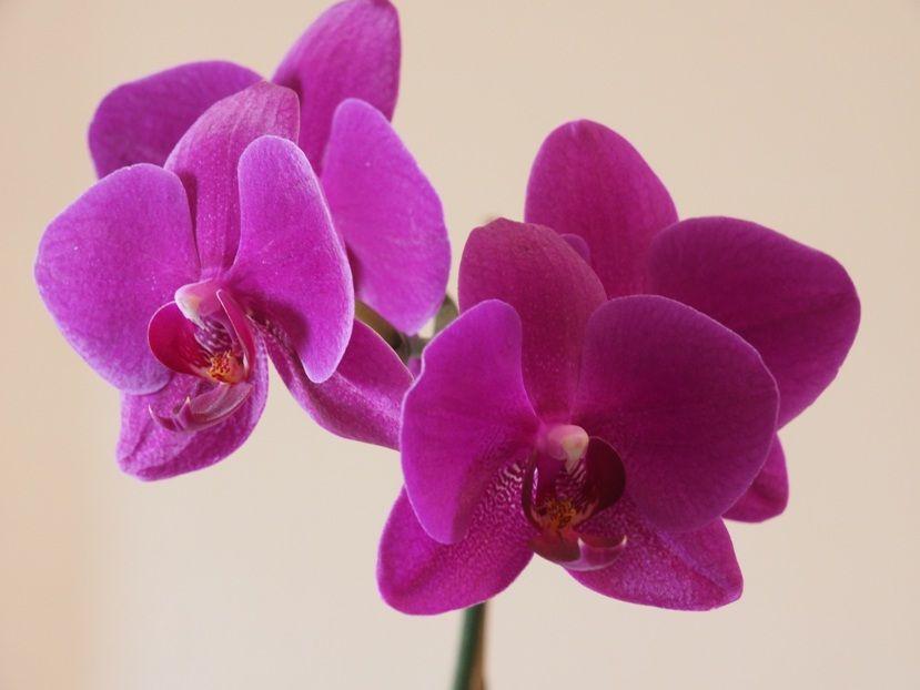 Quelques fleurs!! P3240016_zpsccdc65e5
