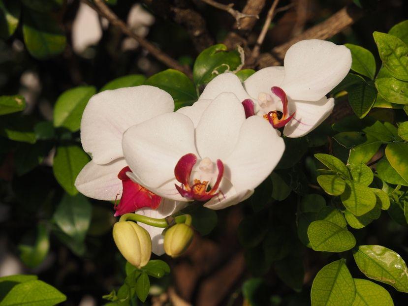 Quelques fleurs!! P3240019_zpsd8106e95
