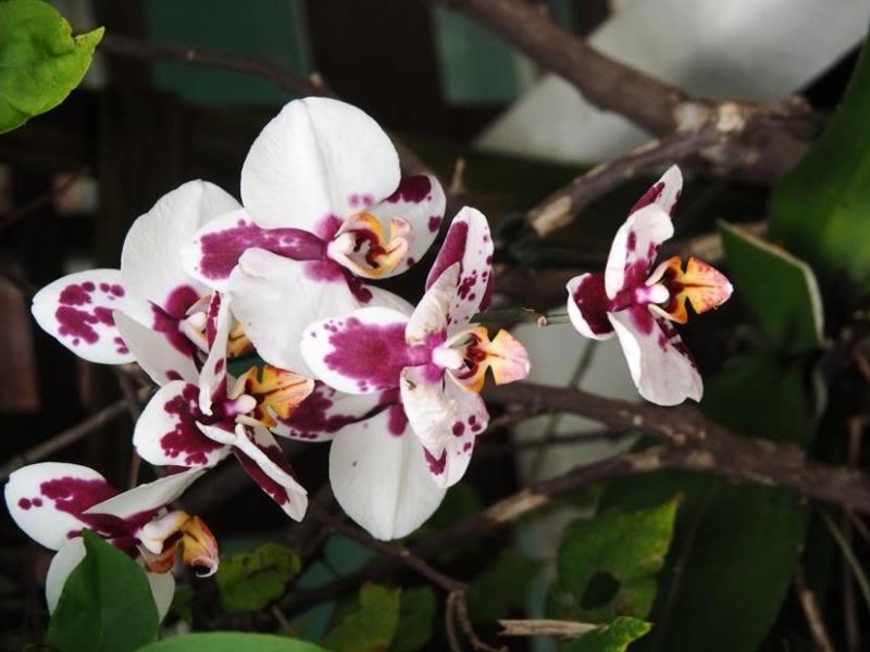 Quelques fleurs!! P3240020_zps89413bee