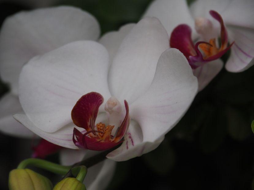 Quelques fleurs!! P3240022_zpsb0cb8cb2