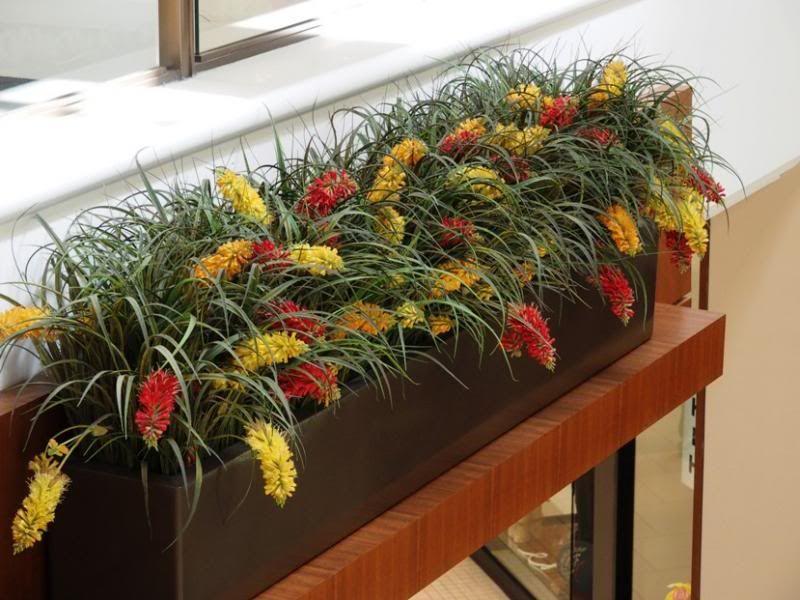 Quelques fleurs!! P3250034_zps3cdaa2ab