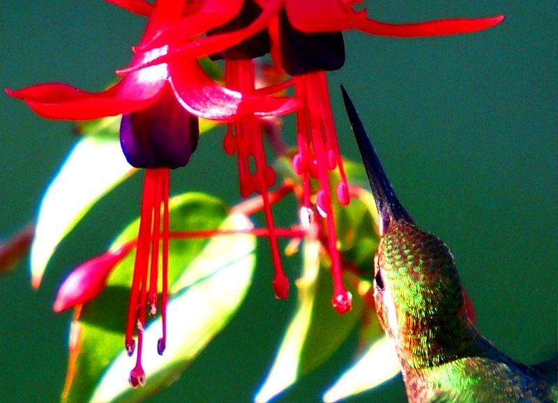 Aux fleurs(vielle prise) P3263157_zpsgpmgwsj2