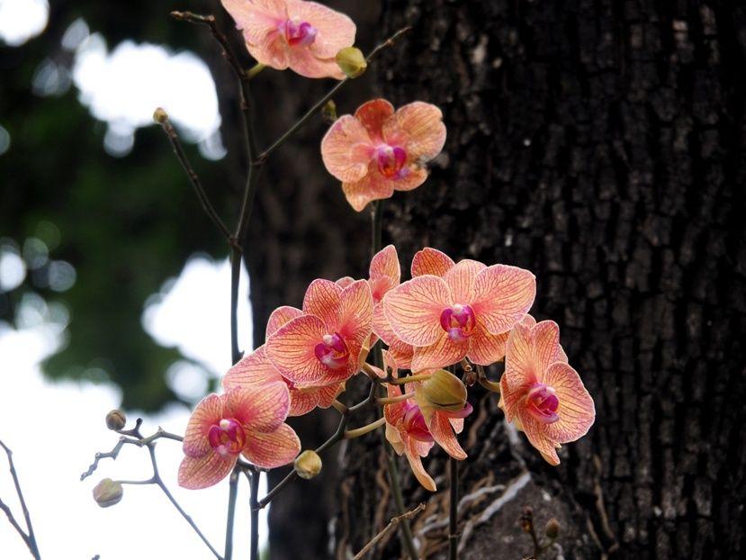 Quelques fleurs!! P3290108_zpsba3a4027