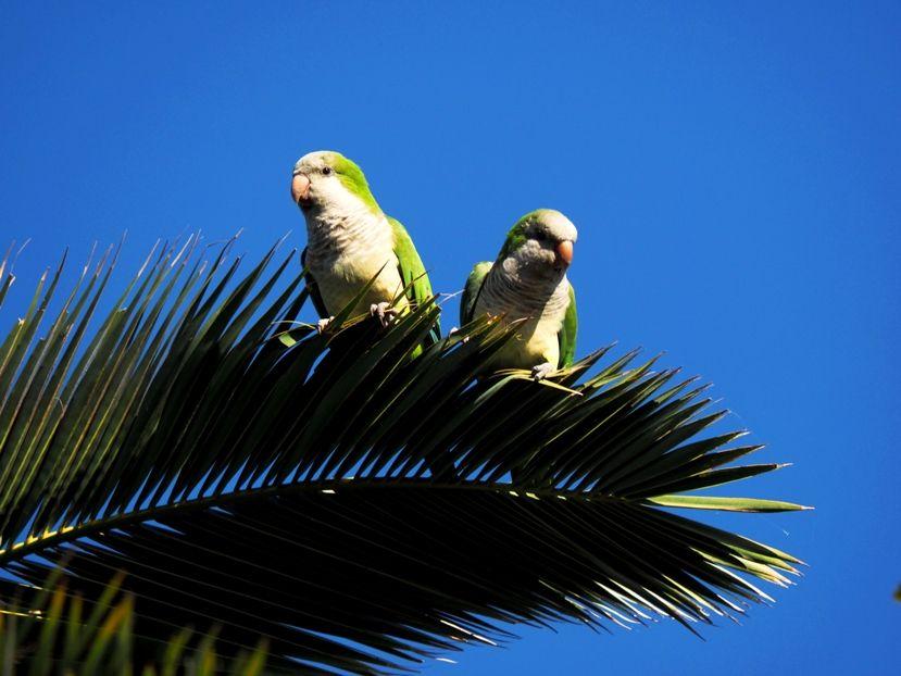Deux oiseaux!!ajoute P41900092_zps02cac831
