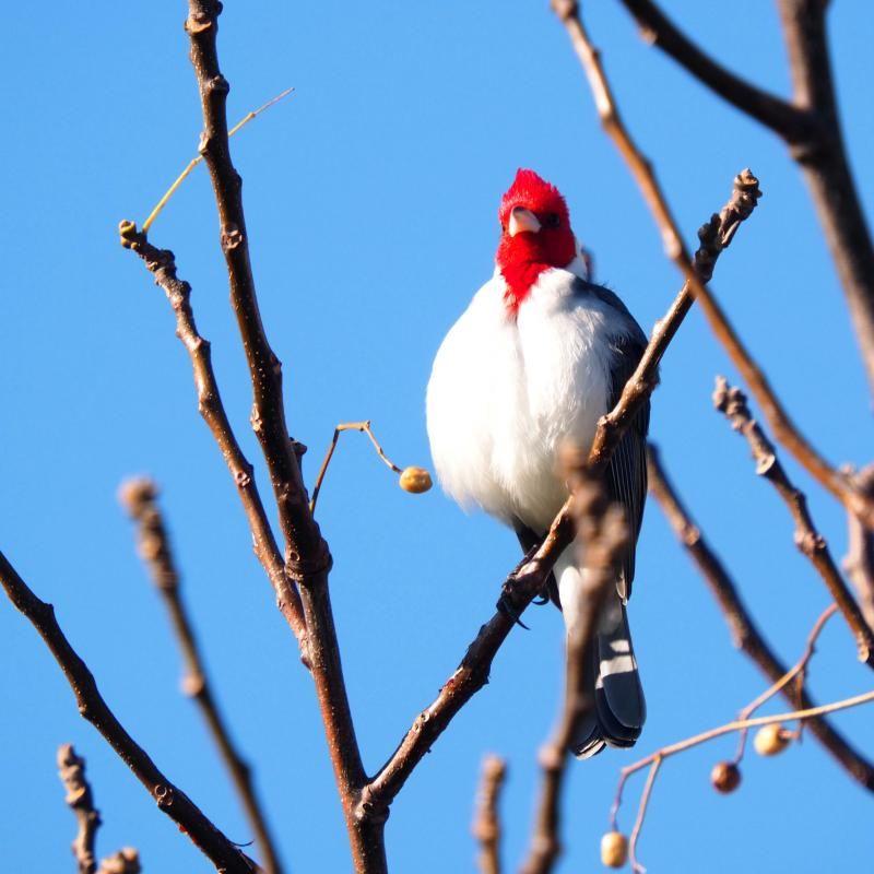 Deux oiseaux!!ajoute P7030018_zpsd411b4f7