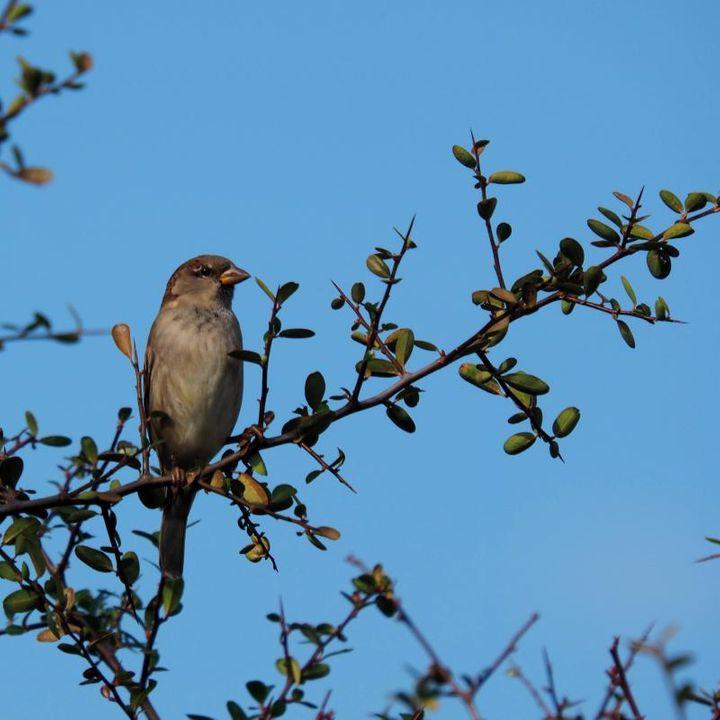 Deux oiseaux!!ajoute P7140001_zps512d6833