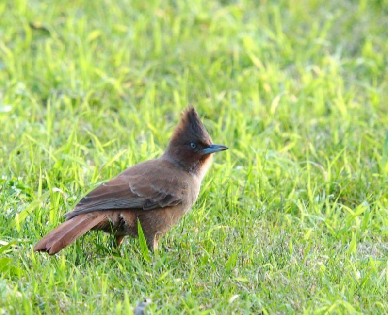 Deux oiseaux!!ajoute P7140011_zpsc5e18ee1