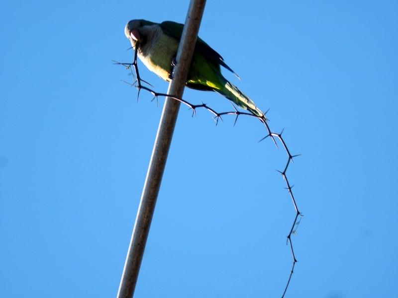 Oiseaux ce Samedi P9050005_zpsp9b2mtfq