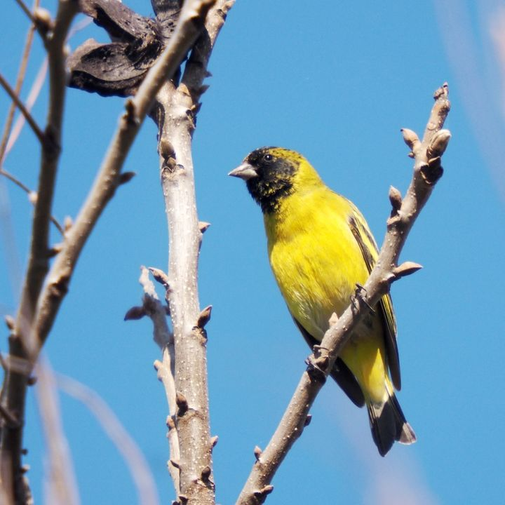 Oiseaux ce Samedi P9050012_zps3mhuhltm