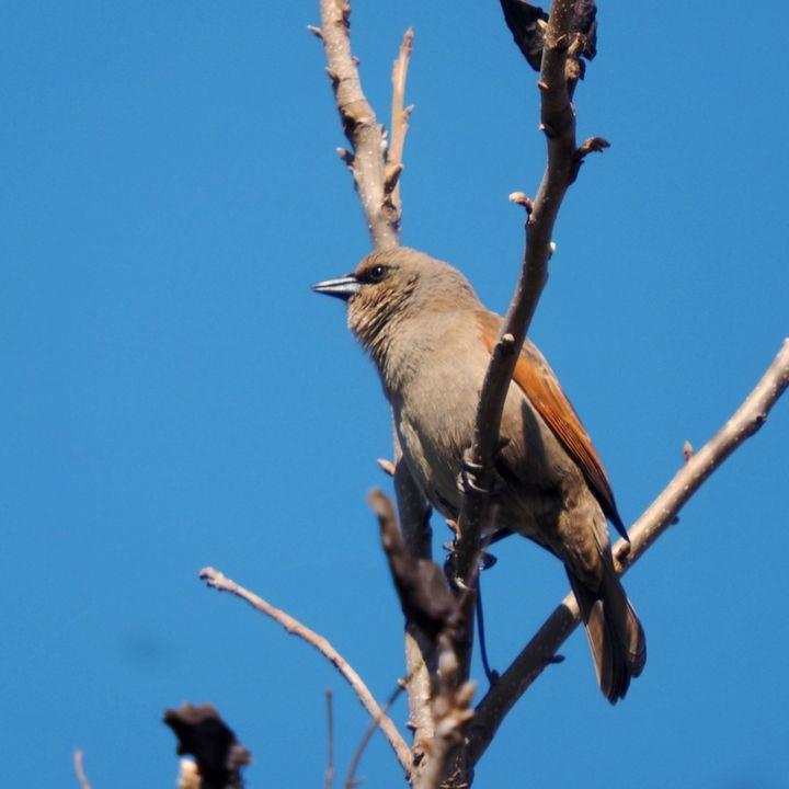 Oiseaux ce Samedi P9050014_zpstm4e02yq