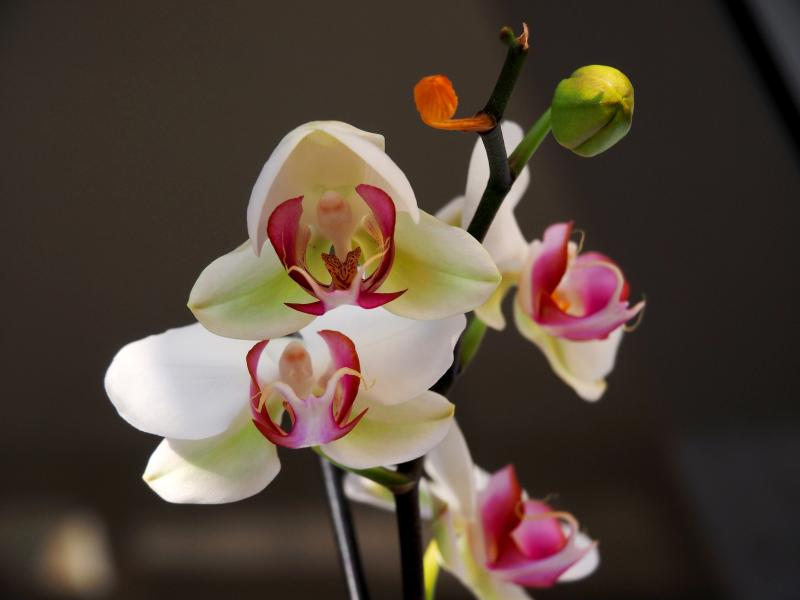 Encore les orchidees!! P9100002_zps9e4cd739