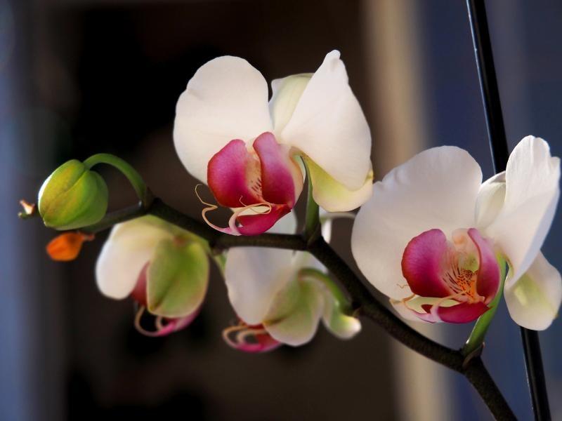 Encore les orchidees!! P9100003_zps25cfa0a3