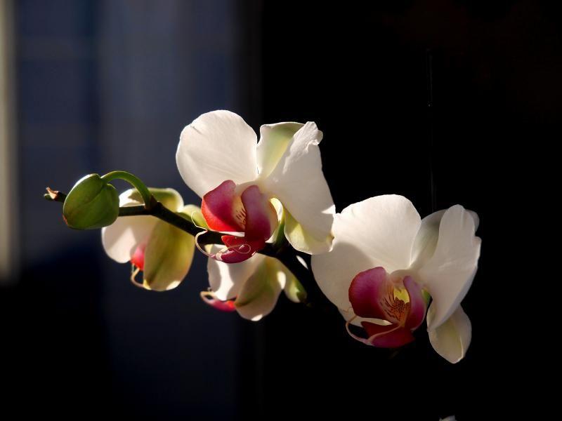 Encore les orchidees!! P9100004_zpsc3a71592