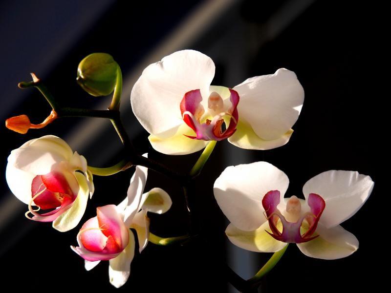 Encore les orchidees!! P9100005_zpse26b3c2a