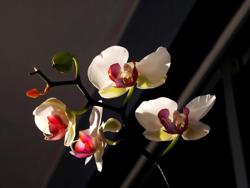 Encore les orchidees!! P9100006_zps2eb637ab