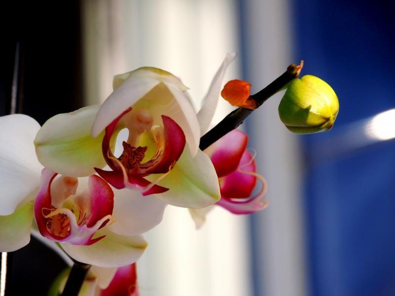 Encore les orchidees!! P9100007_zpsbde5fc74